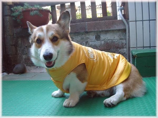 史努比黃衣.jpg