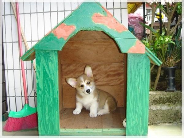 搜拉的木頭狗屋