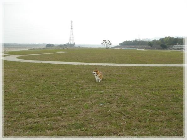 3.9 後龍溪畔-DSC08167.JPG