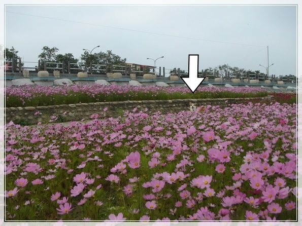 3.9 後龍溪畔-DSC08196.JPG