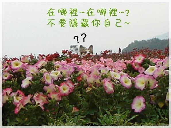 3.9 後龍溪畔-DSC0823.JPG