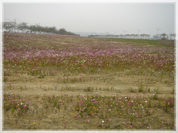 3.9 後龍溪畔-DSC08264.JPG
