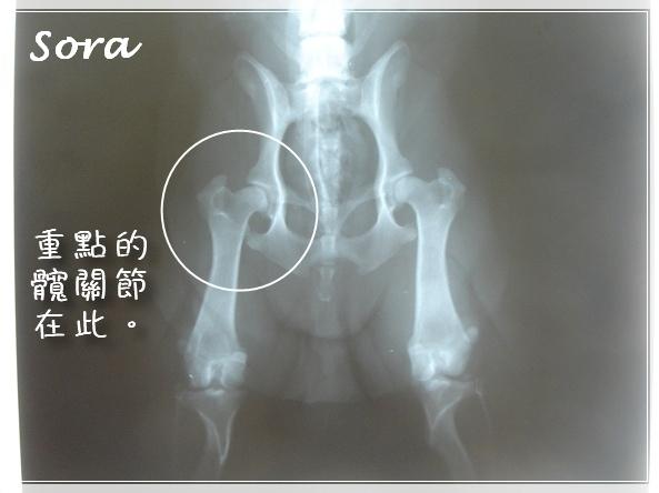 6.16 愛屋CHD檢查-DSC09657.jpg