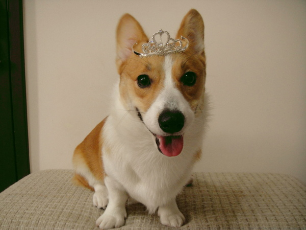 YOYO小公主.JPG