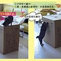 (4m)汽車座椅VS好奇貓
