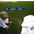 (10M)綠風草原-寶寶怕草地2-2