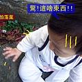 (11M)6號花園-寶寶in石頭2