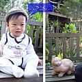 (11M)6號花園-寶寶怕假貓貓