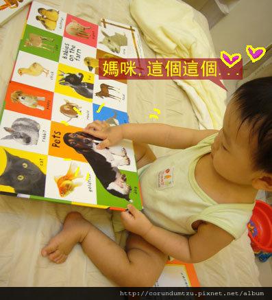 (13M)寶寶最愛看看的書-動物百科03