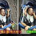 (14M)散步去-寶寶最愛看天空樹影