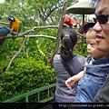 (15M)六福村遊-看鸚鵡3