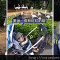 (15M)六福村遊-看紅鶴