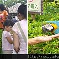 (15M)六福村遊-看鸚鵡2
