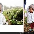 (17M)銅鑼杭菊-小心翼翼在花中行走