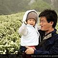 (17M)銅鑼杭菊-和把拔看花