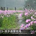 (17M)通霄花海