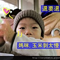 (17M)銅鑼杭菊-吃玉米2