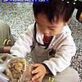 (17M)銅鑼杭菊-當然杭菊是一定要買的