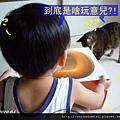 (23M)新馬桶-好奇寶寶與好奇貓02