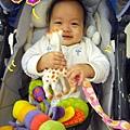 (6M)刀疤貝很愛她的新玩具