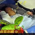 (6M)刀疤貝第一次小睡