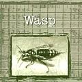 Wasp (1).jpg