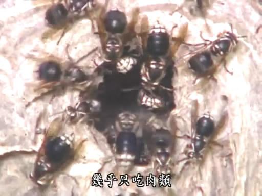 Wasp (3).jpg
