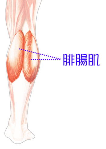 台中纖纖美腿瘦小腿|菲仕美03