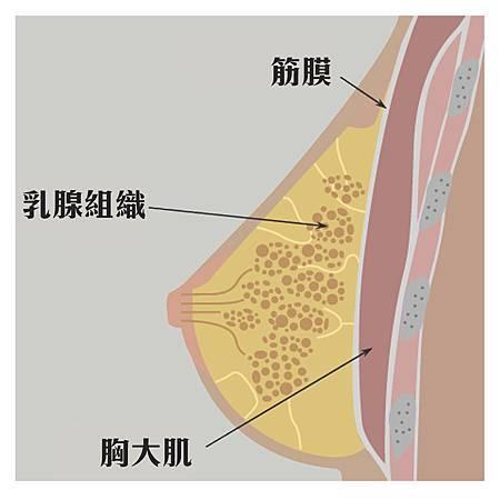 乳房組織修