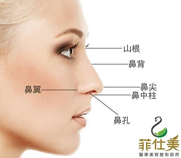 認識鼻子.jpg