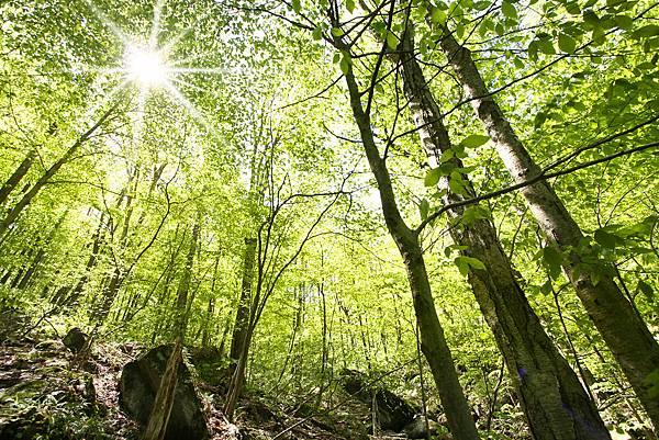 1 light-thru-trees.jpg