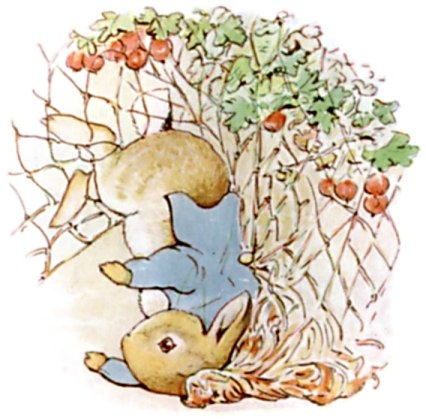 peter rabbit %26; chamomile tea02.jpg