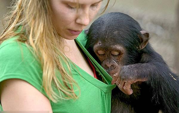 0223-黑猩猩03.jpg