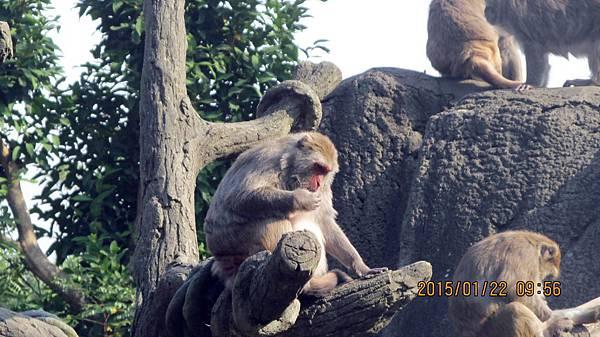 1040122047動物園.JPG