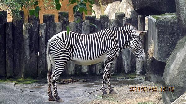 1040122125動物園.JPG