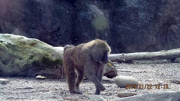 1040122128動物園.JPG