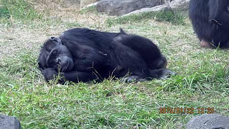 1040122137動物園.JPG