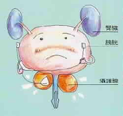 0719-攝護腺 (1).jpg