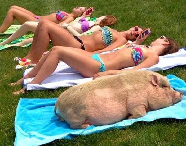 女人與豬.jpg