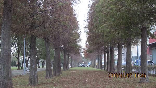 1050107179八德玉山公園 (9)