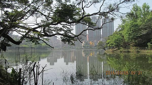 1050405006金龍湖