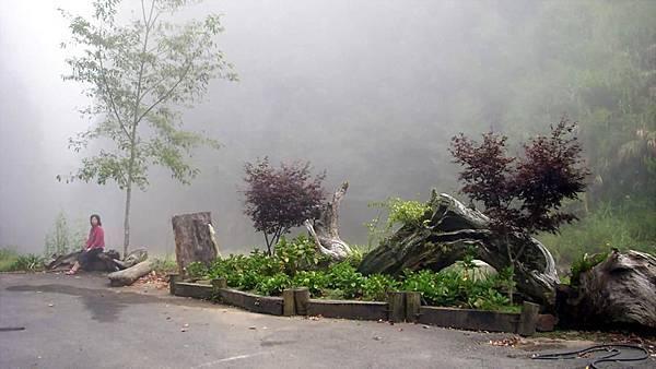 起霧的杉林溪,有矇矓美
