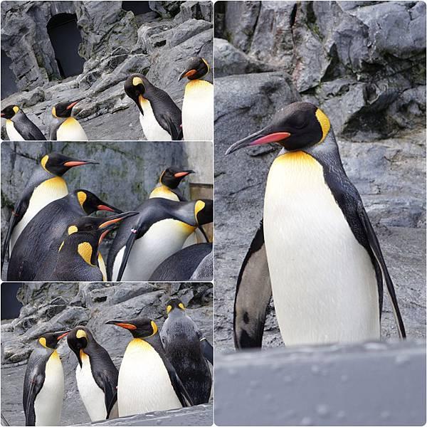 DSC04760_Fotor_CollageZOO企鵝.jpg