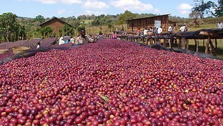 natural-process-coffee.jpg