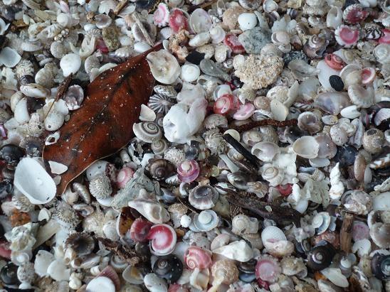 shell n leaf.JPG