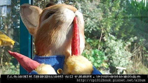 小兔彼得新聞