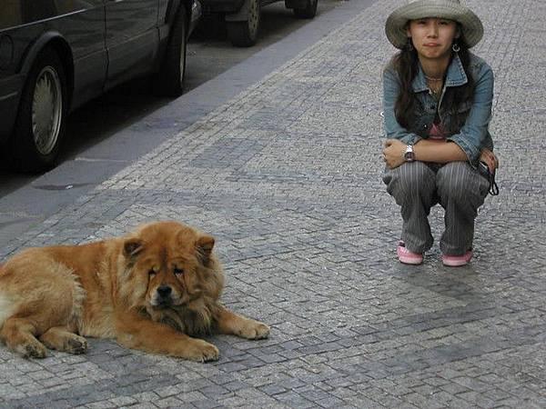 各位觀眾...捷克也有獅子狗..