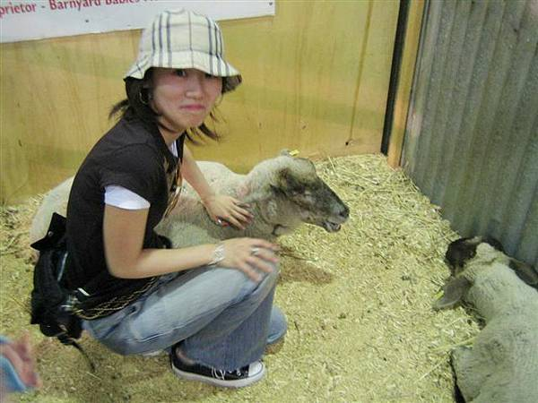 會場還有展示小小羊