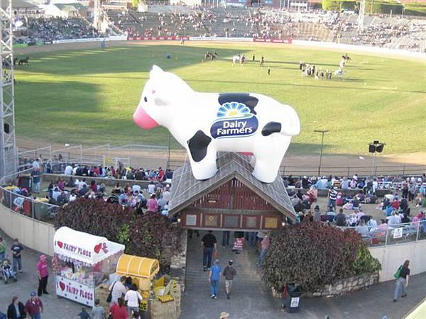 大牛在屋頂上