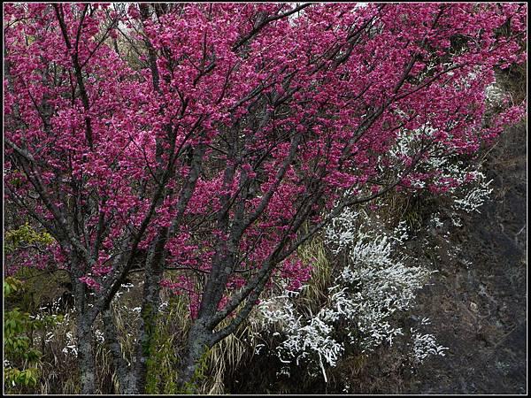 武陵的顏色IV.jpg